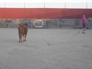 Capeas en Campo Real